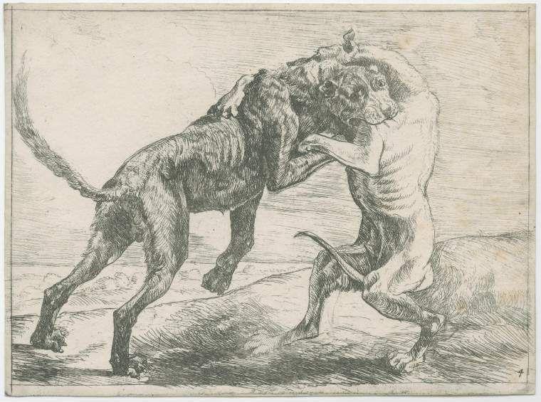 Fitzwilliam Museum, Paulus van Hillegaert, Dos perros peleando, 1654