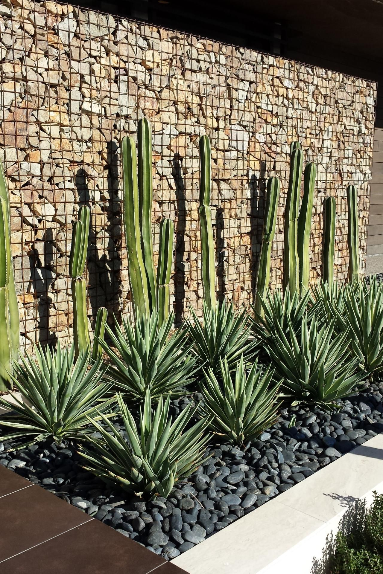 gaviones decorativos para el jard n y jardiner a Debajo de ventana de cocina. Cactus. Altos. Piedras grises Jardines  Verticales, Ventana