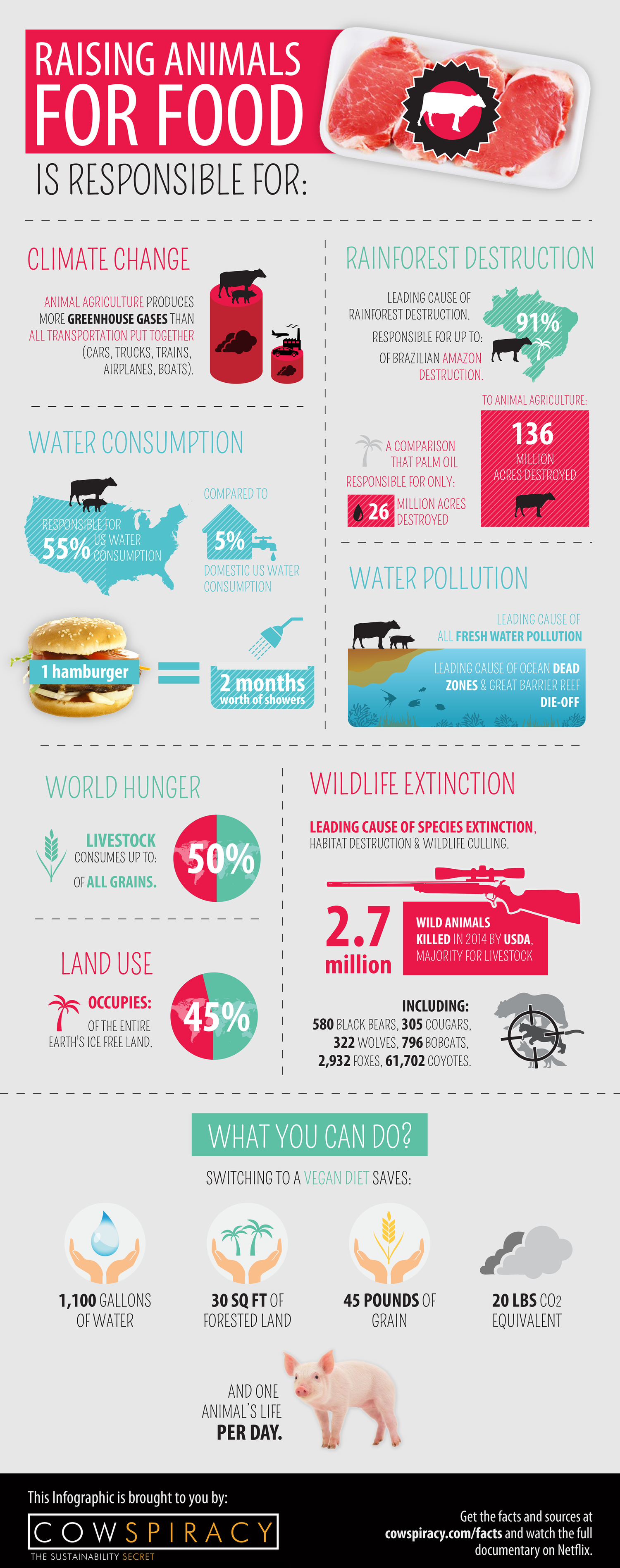 why take a vegan pledge? raising animals for food is