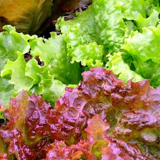 New Gardeners Growing Vegetables In Pots Fast Growing 400 x 300