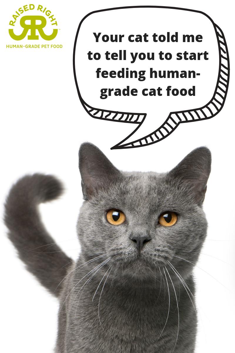 It's time to start feeding humangrade cat food