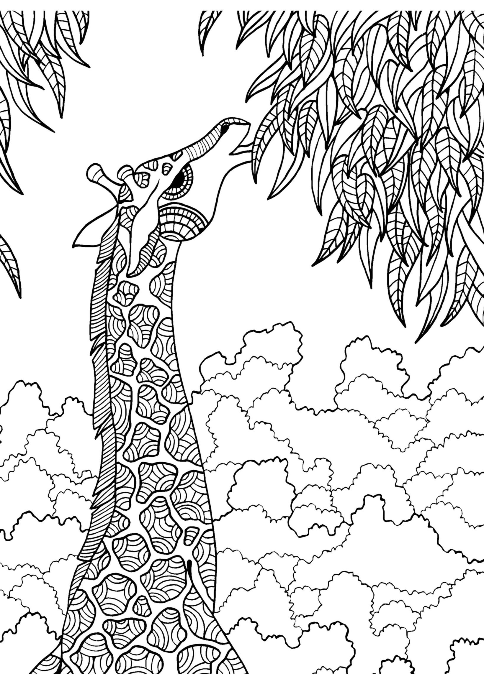 Giraffe adult colouring page Colouring In Sheets Art