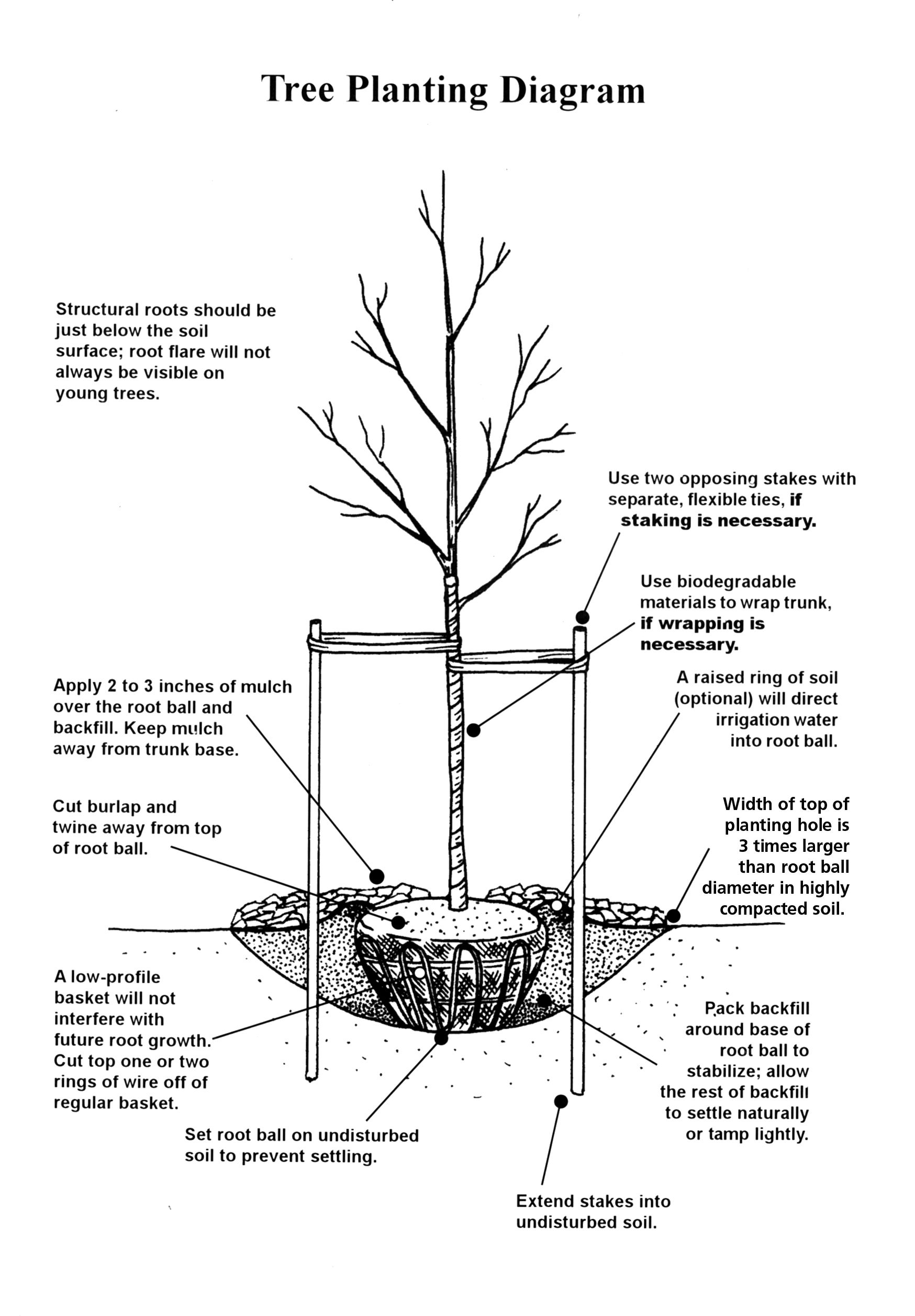 tree planting diagram fruit trees trees to plant tree planting house yard  [ 1748 x 2515 Pixel ]