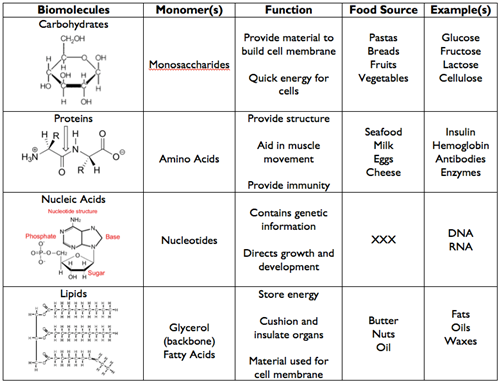 4 Major Biomolecules Macromolecules B9a Pinterest Science