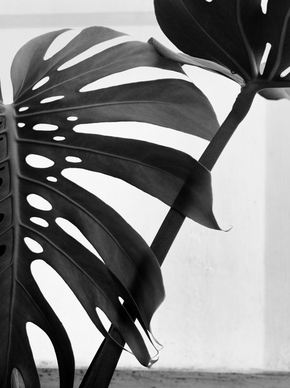 Imogen Cunningham flower photography | Natural Forms ...