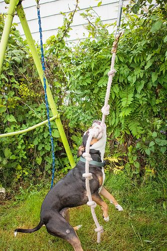So Fly Fitdog Friday How To Make A Spring Pole Dog Playground