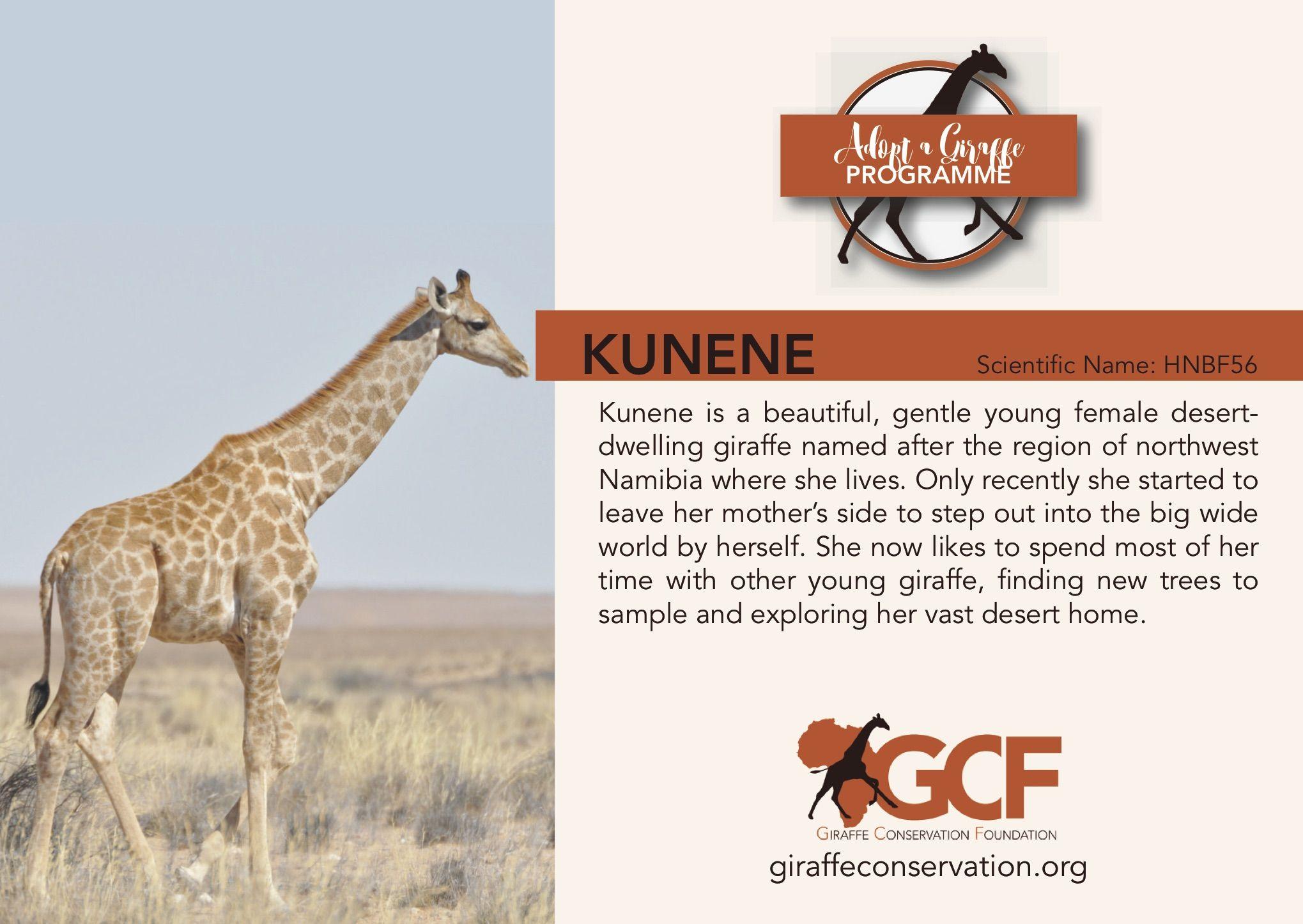 Adopt A Giraffe Adopt A Giraffe Giraffe Adoption