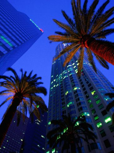 Citibank Center and Palm Trees from Below, Los Angeles, United States of America Photographic Print