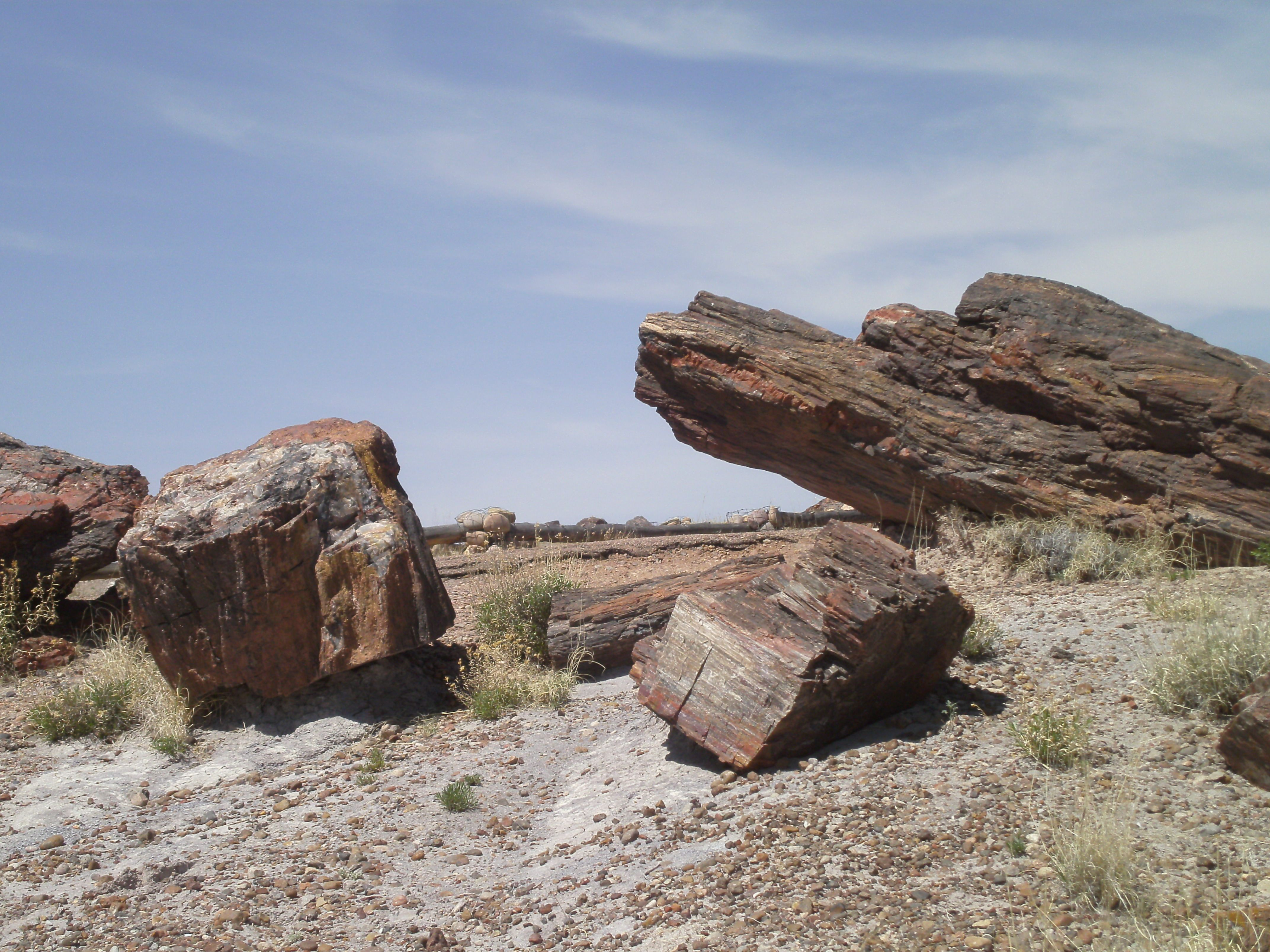"""""""In the great desert of northern Arizona the traveler, threading his way across a sage-brush and cacti plain shut in by abrupt-sided shelves of land rising here and there some hundreds of feet higher, suddenly comes upon a petrified forest.""""  Percival Lowell  (Petrified Forest)"""