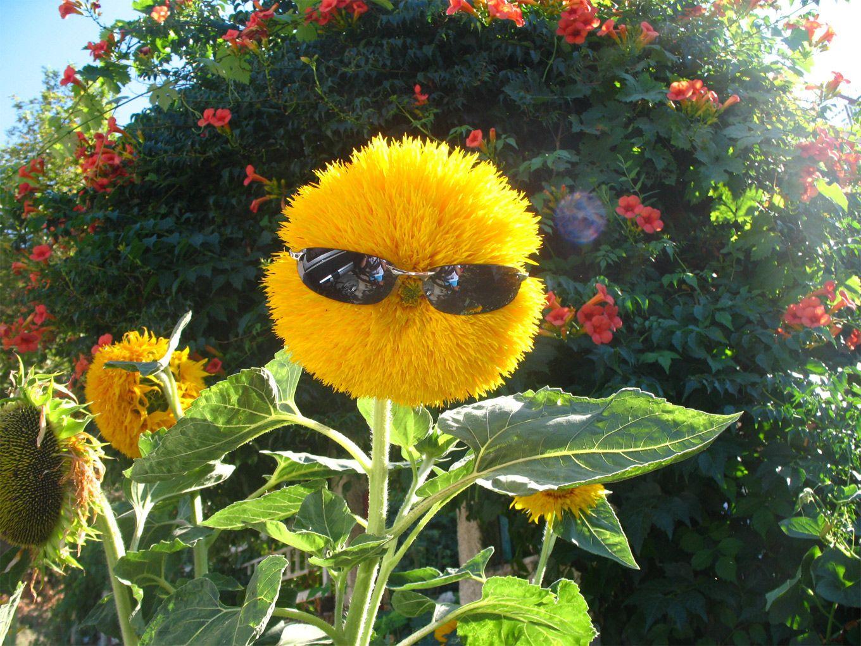 Открытки, смешные картинки цветка