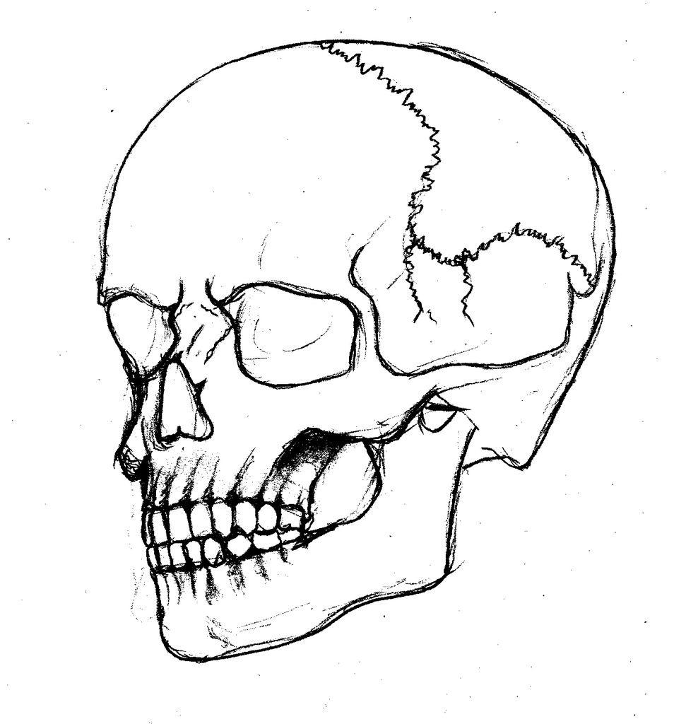 Skull Outline With Skull Outline Skull Art Outline