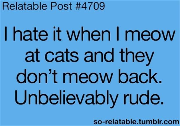 Don't act like you never meow at them and don't get a little miffed when they turn, so pompously, away.