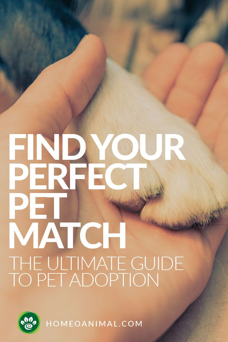 how to choose the perfect dog