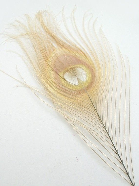 bleached peacock feather
