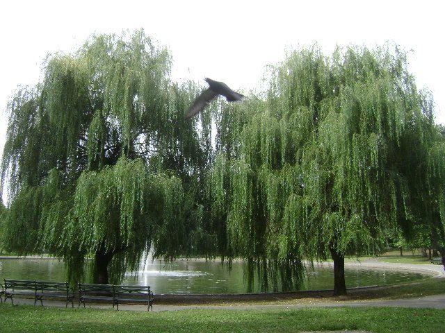 Silk Gardens & Trees New York Ny