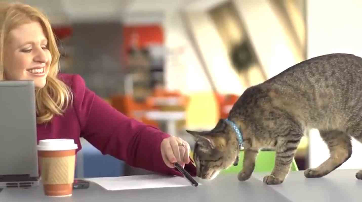 Jill Is A Cat Behaviorist And Part Of The Purina One Cat Expert Team Intrigued By The Subtleties Of Cat Behavior And Comm Cat Help Cat Behavior
