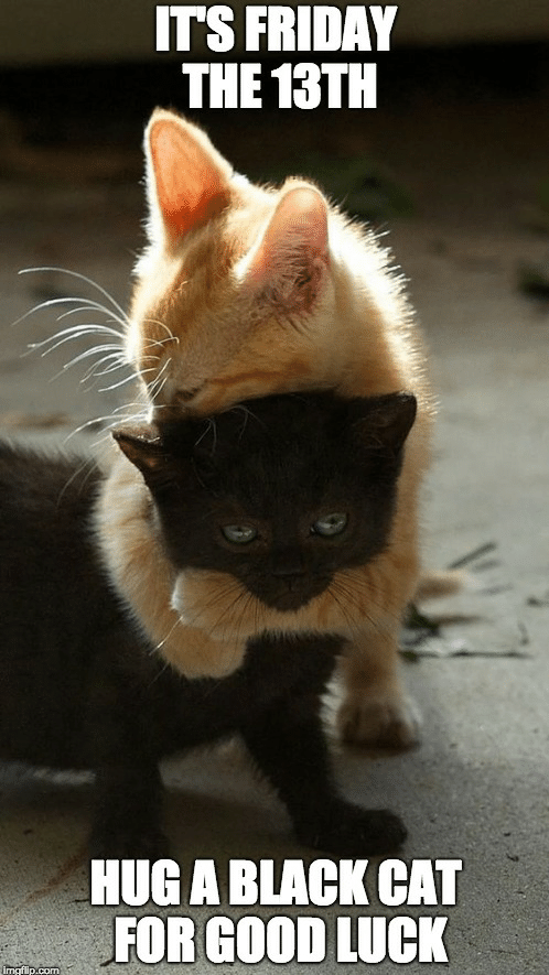It's Friday the 13th Hug a black cat today!! in 2020