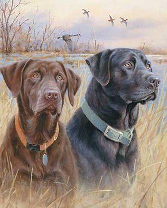 Pin By Mark On Love Retriever Dog Hunting Dogs Labrador Retriever Dog