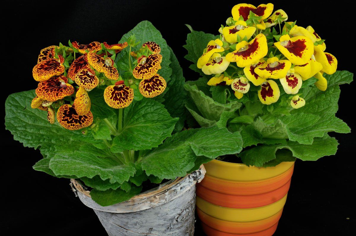 Лучшие цветы для выращивания живых букетов на подоконнике ...