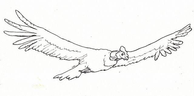 Condor Dibujo Para Colorear Condor Dibujo Condor Para