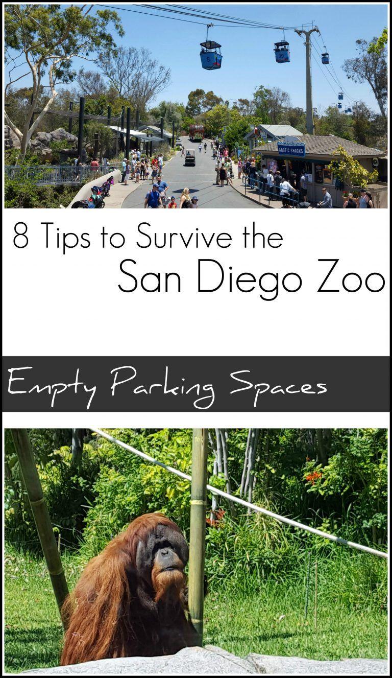 8 Tips To Survive The San Diego Zoo San Diego Zoo San Diego Zoo