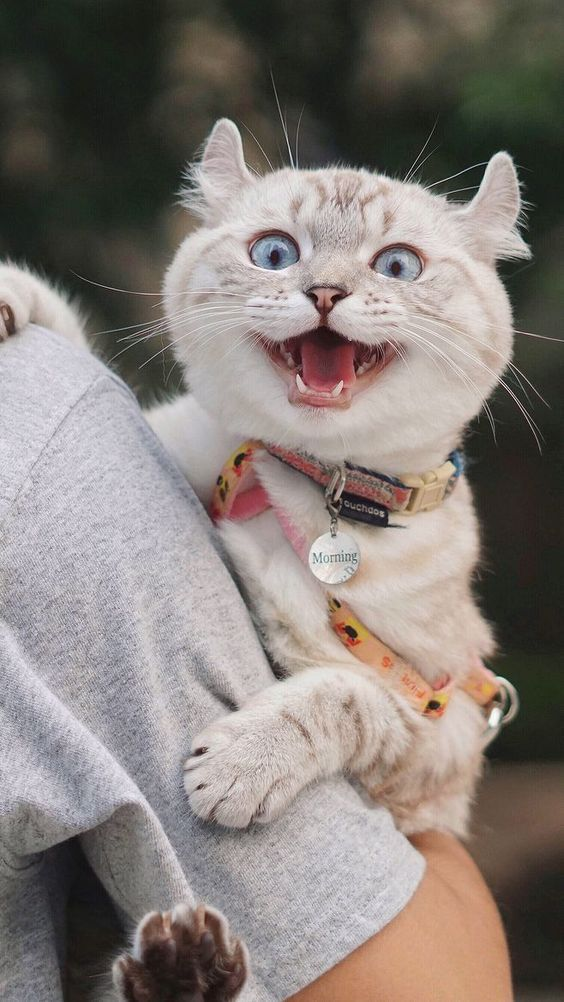 Photo of Top 6 Signs That Show Your Cat Is Happy