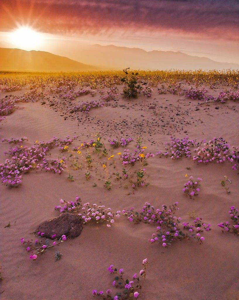 Variations on Lavender, Goldenrod, & Cream desert dreams