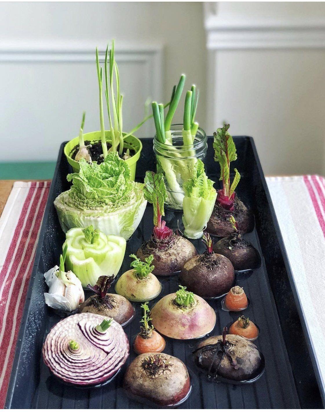 Regrow Food Kitchen Scraps Easily Video Tutorial | Regrow vegetables, Good health tips, Growing