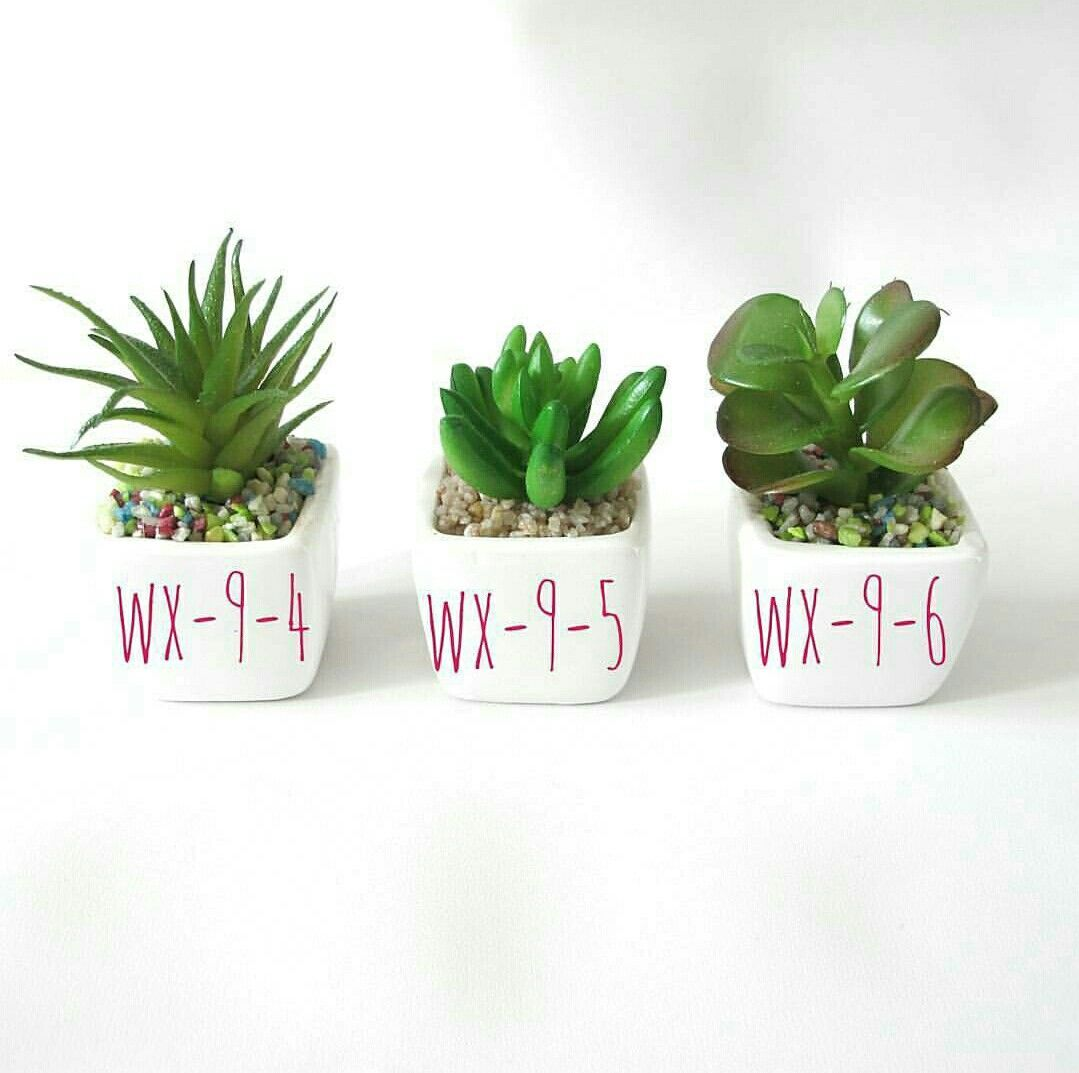 Kaktus Mini Material Ceramic Bahan Kaktus Karet Size Tinggi Pot