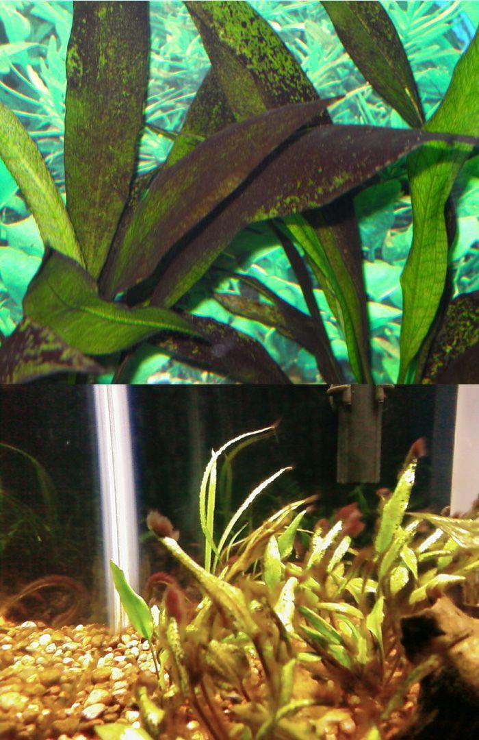 How To Get Rid Of Brown Algae In Saltwater Pool