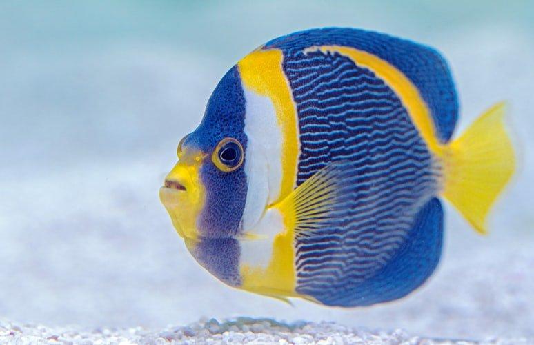 Media Tweets By Lunula Nyomandian Twitter Pet Fish Yellow Fish Colorful Fish