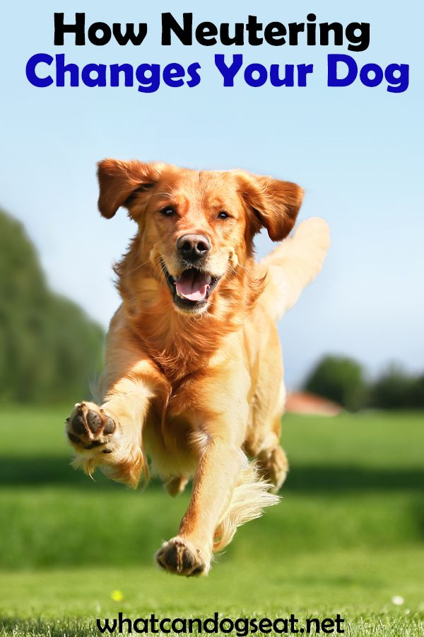 Male Dogs Can Be Neutered According To Veterinarians At