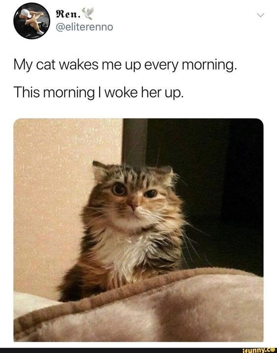 Photo of Sleeping Cats Who Are Pissed At Their Owners For Waking Them Up (Memes)