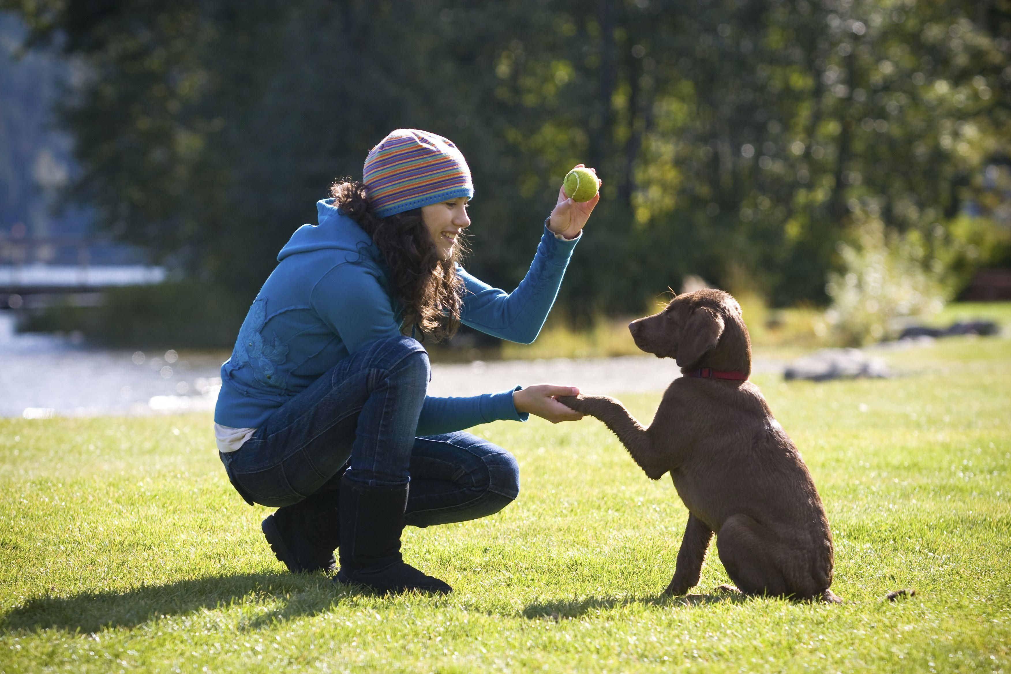 Courteous Contributed Best Dog Training Tricks View Website Dog
