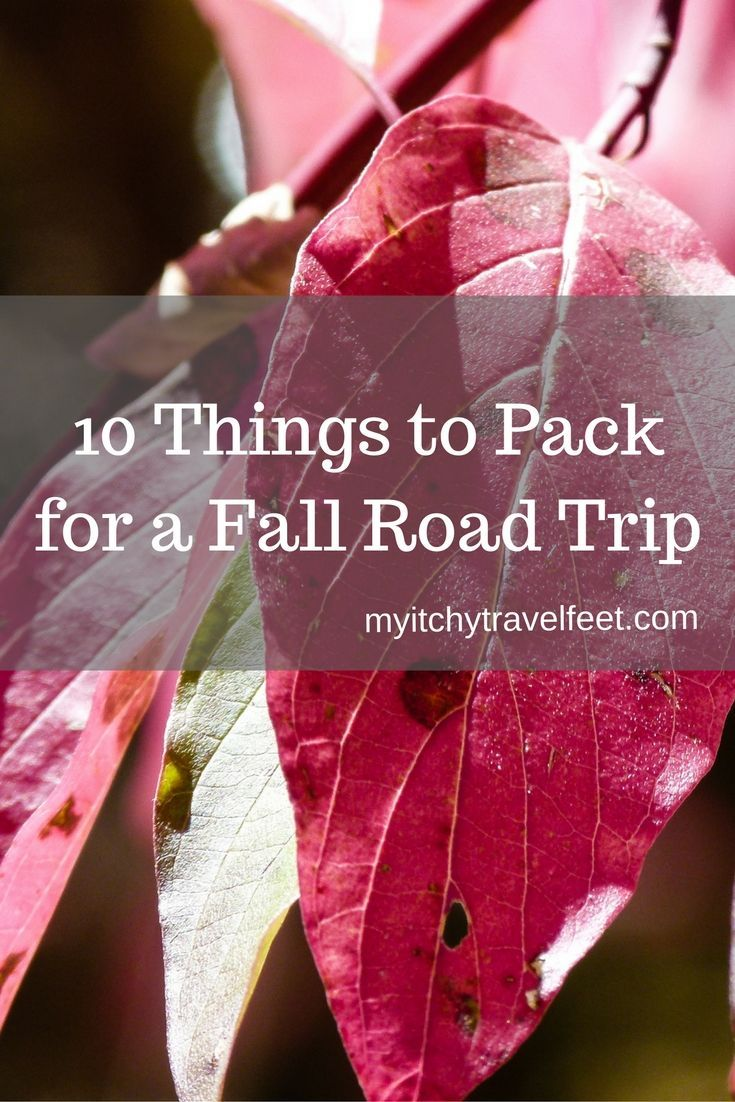 Camera? Check. Fleece jacket? Check. LED camper light? Check. If you're taking a fall road trip, click through to the article to learn about 10 things to bring with you.