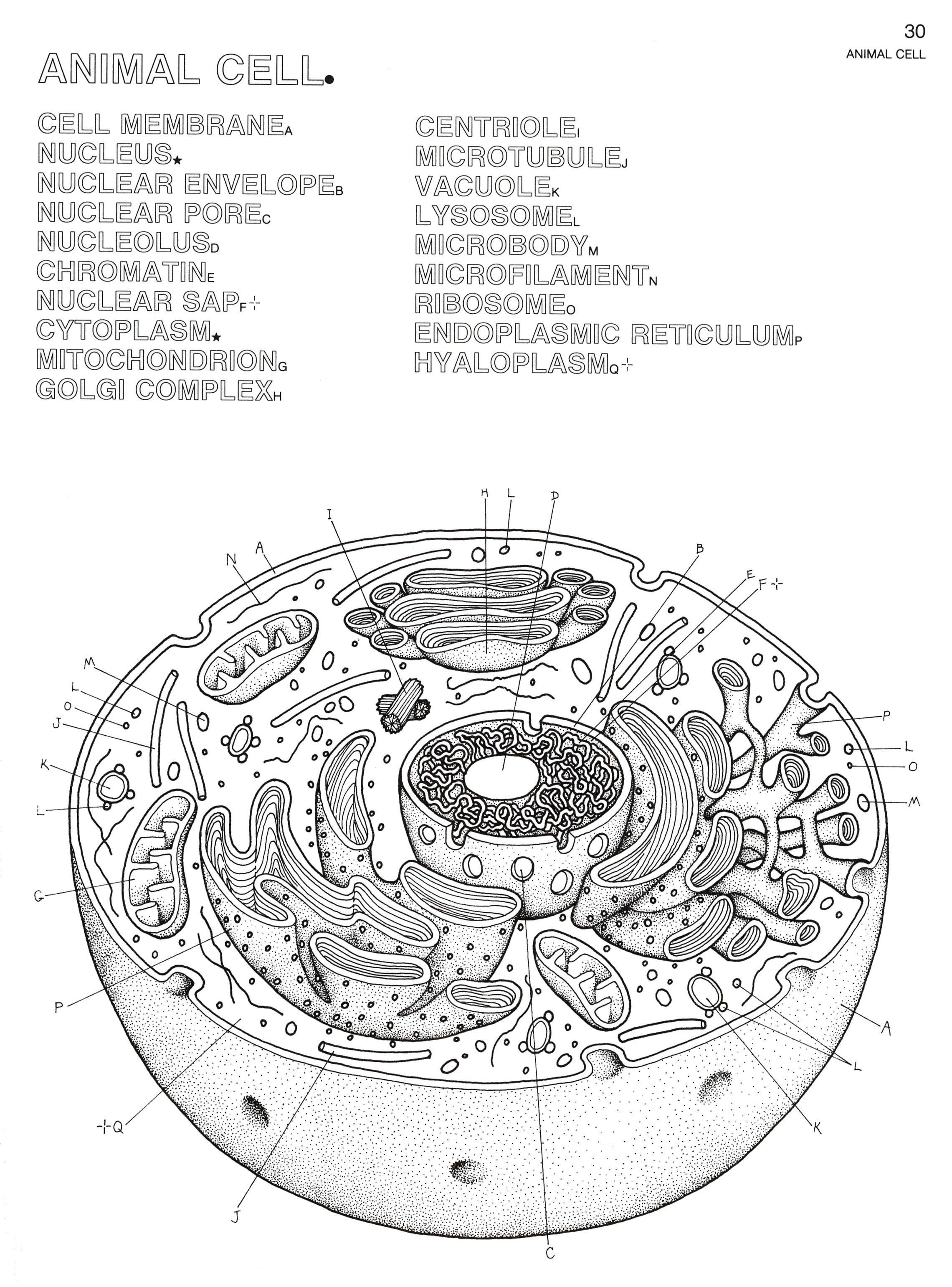 Awesome Cell Organelle Coloring Sheets Plant And Animal Cells Cells Worksheet Animal Cell Drawing [ 3081 x 2280 Pixel ]