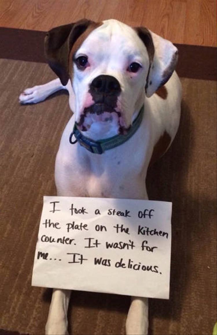 Funny Dog Shaming Picture Dump 22 Pics Dog Shaming Funny Boxer