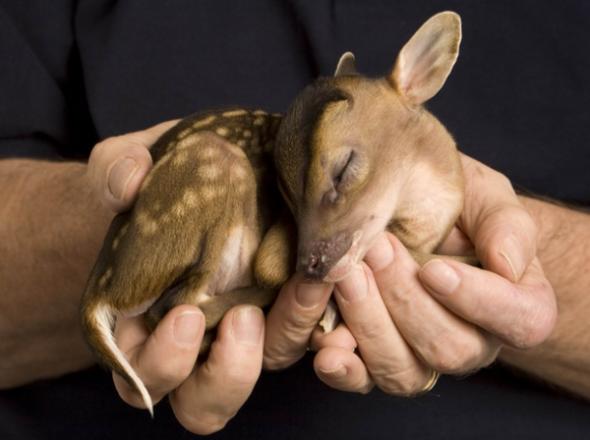 Save nature love animals