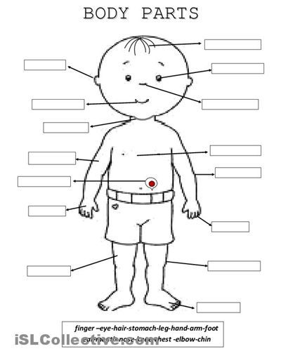 Parts of the Human Body | Spelling worksheets, Life science and ...