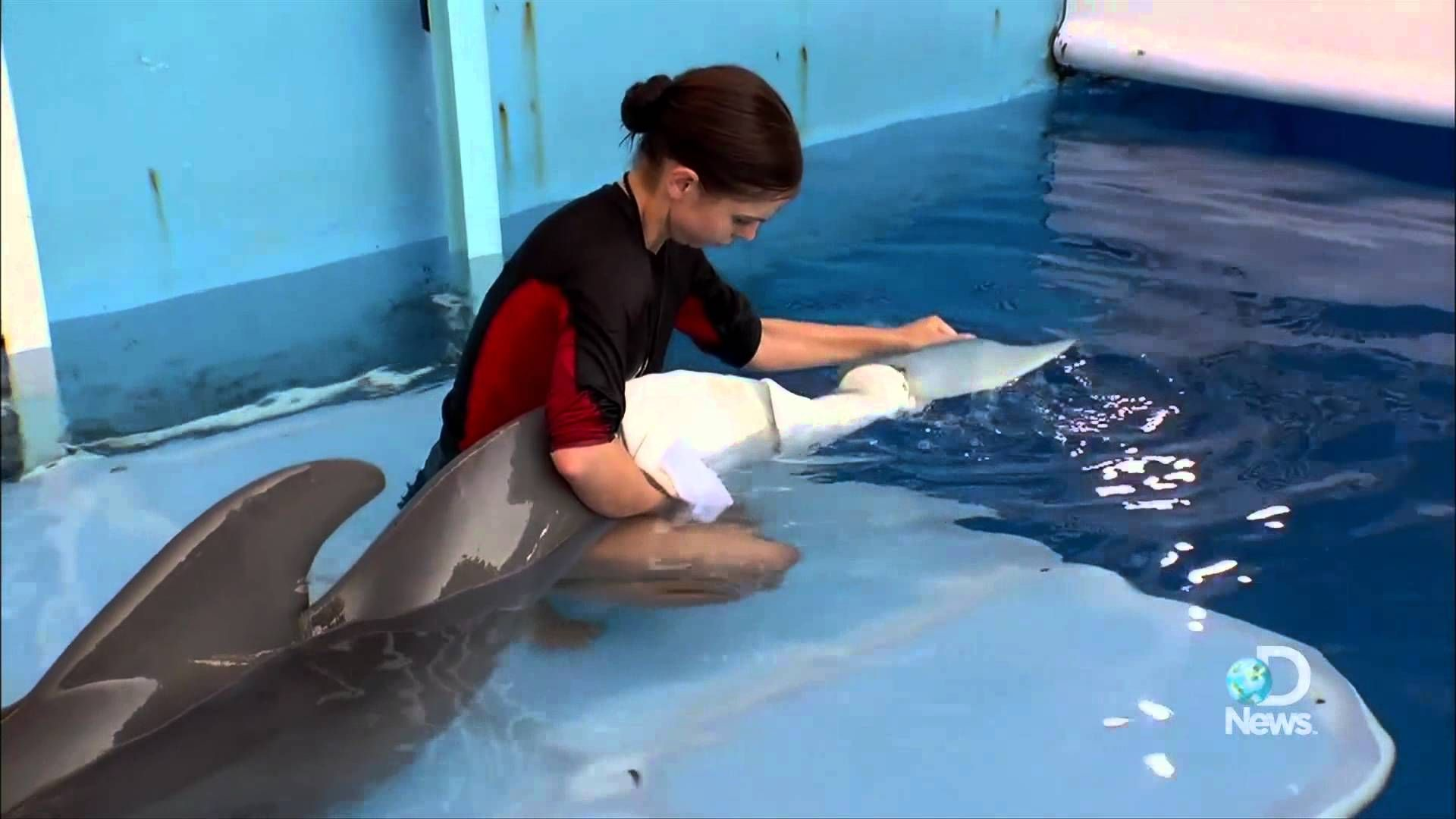 Dolphin Tale How Real is Winter's Story? Dolphin tale