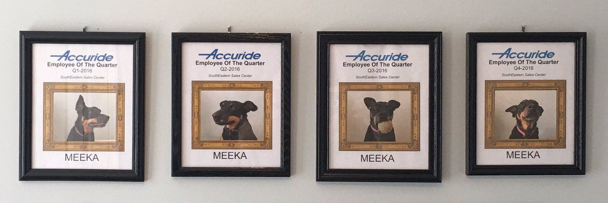 Man Who Works From Home Names His Dog Employee Of The Month