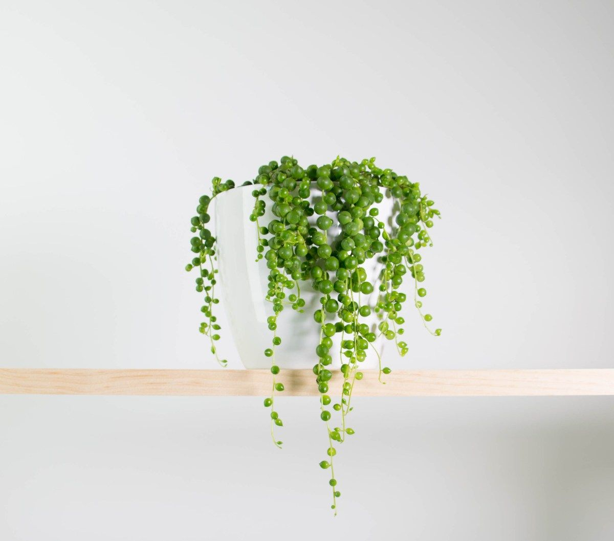String of pearls in simple white pot déco pinterest pearls