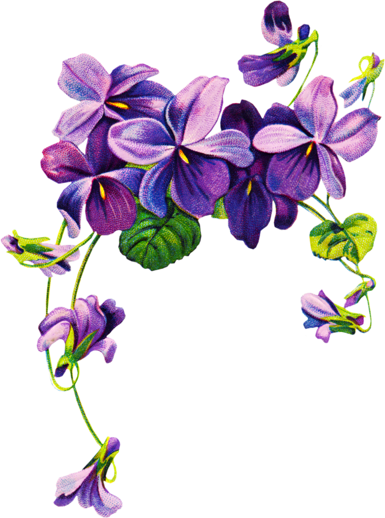 African Violets Border Clip Art Free Vintage Violet Graphics