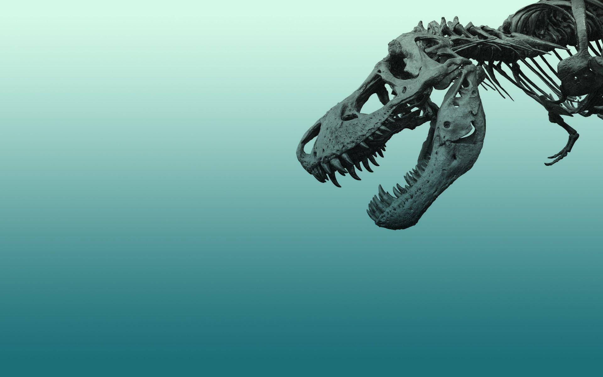 Dinosaur skeleton wallpaper