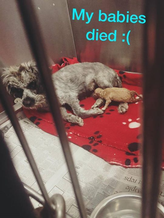 Princess is a beautiful protective mother who was dumped
