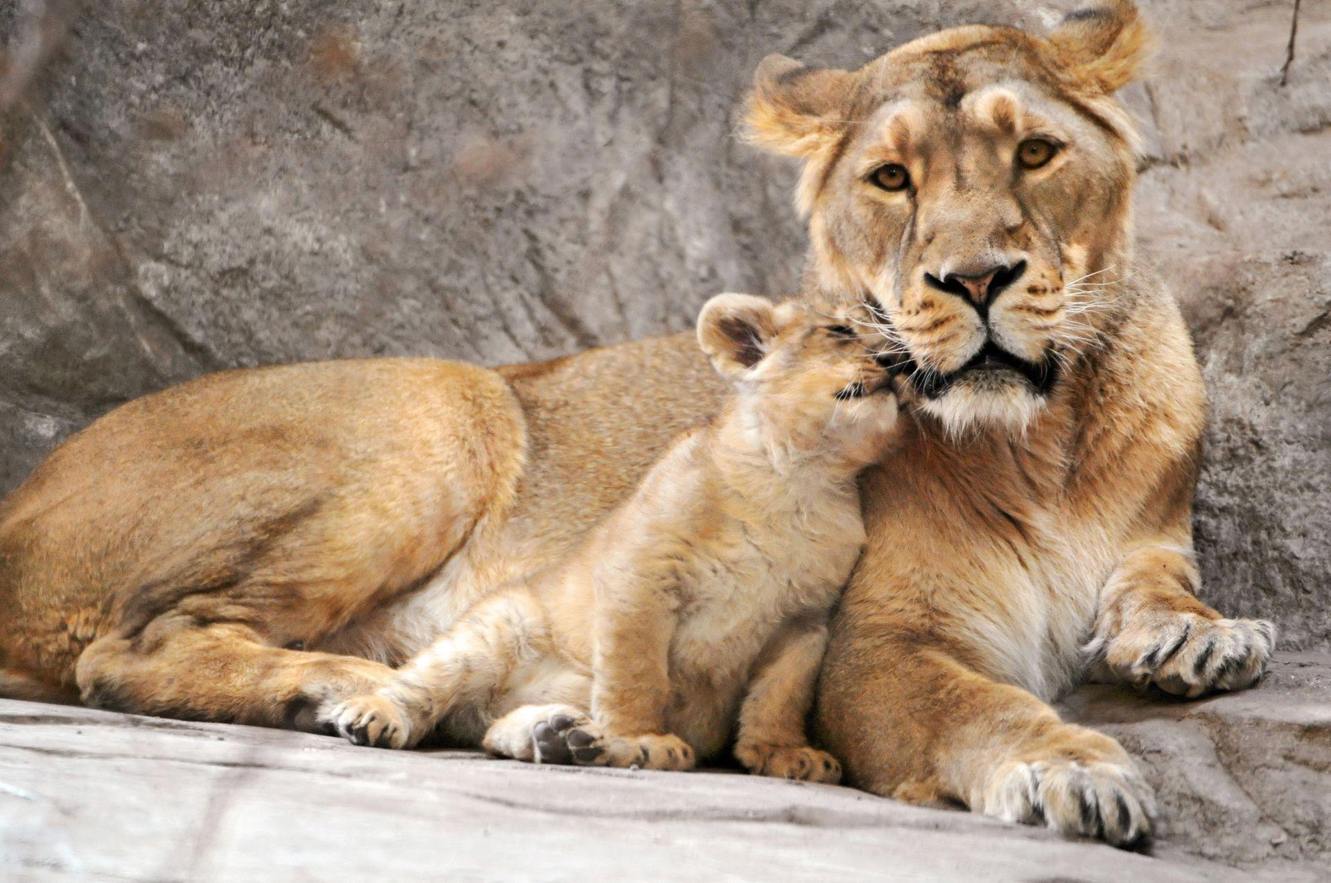 это картинки с мамами и детенышами животных год дайверы проводят