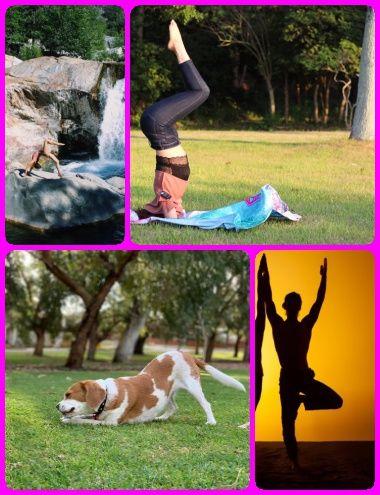yoga poses for beginning seniors in 2020  yoga poses for