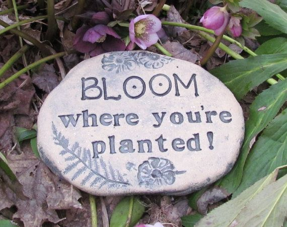 Bloom Where You Re Planted Charming Vintage Style Garden Stone Housewarming Gift Quote Sign With Ferns And Flowers Bloom Where Youre Planted House Warming Gifts Gift Quotes