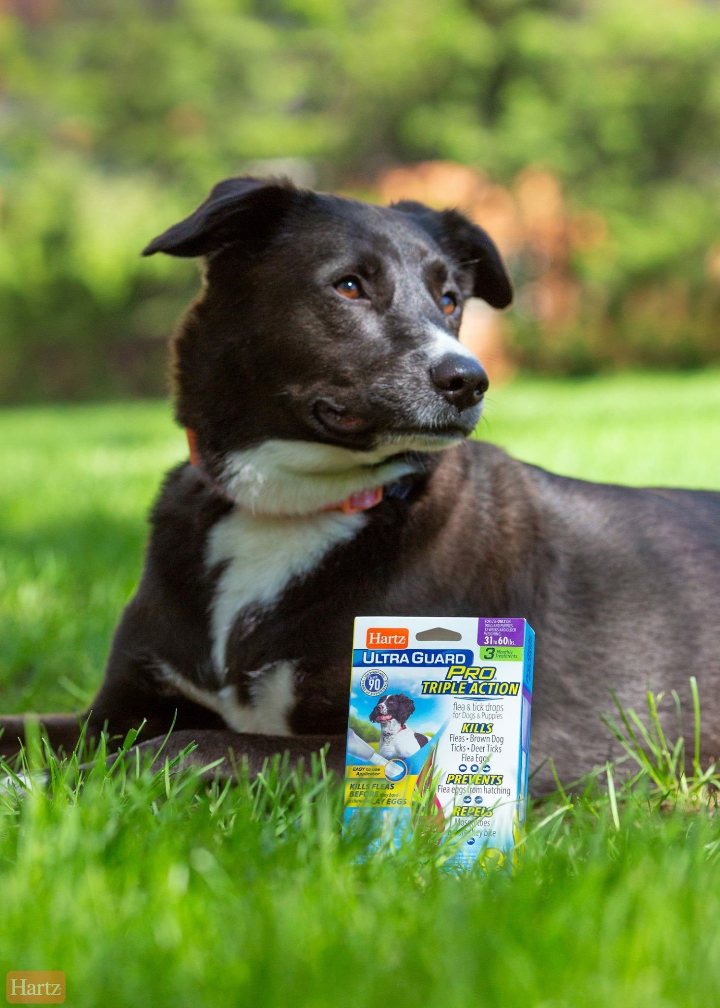 Safe Usage Is Crucial With Flea Tick Products Fleas Ticks Pest Prevention
