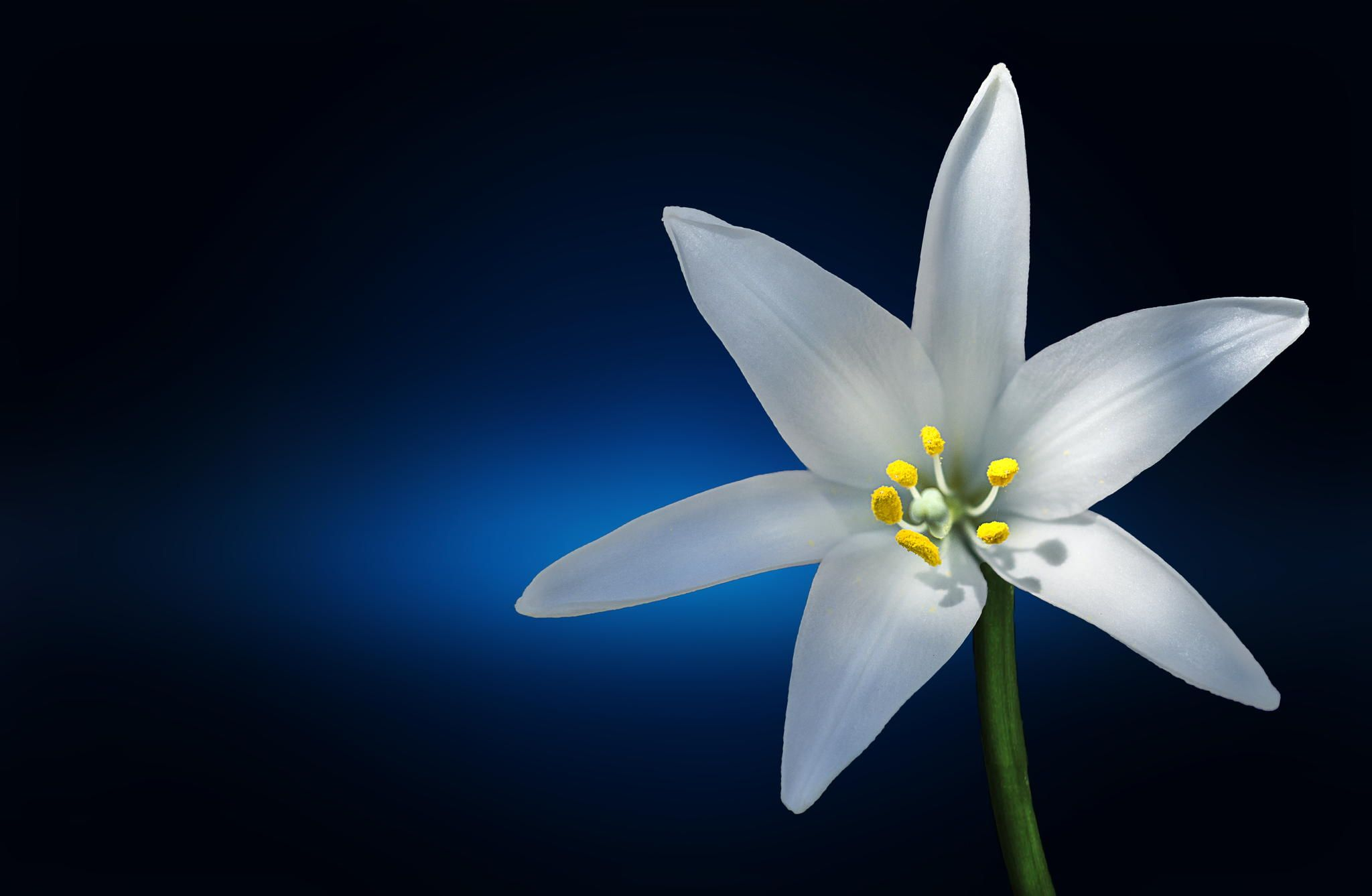 Lily by Bessi  on 500px